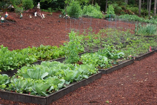 raised garden beds organic gardening