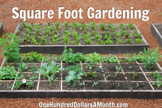 Everything You Need to Know About Square Foot Gardening One