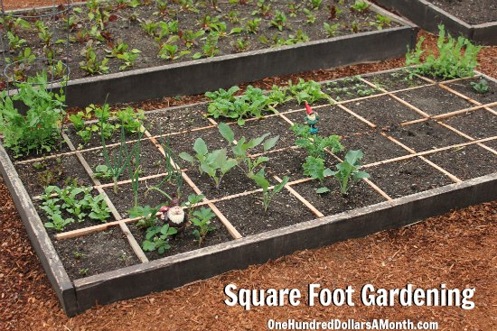 Square Foot Gardening U2013 Potatoes, Onions, Strawberries, Kale And More