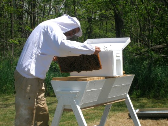 top bar hives