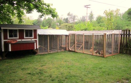 chicken coop with chicken run