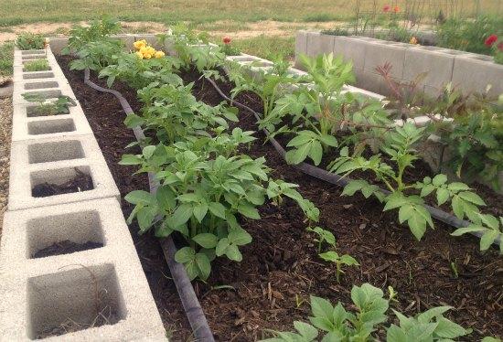 cinderblock garden