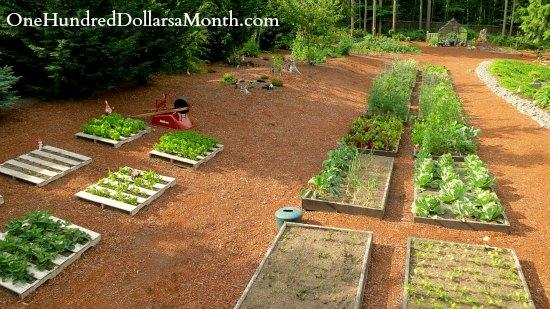 mavis garden blog raised garden beds