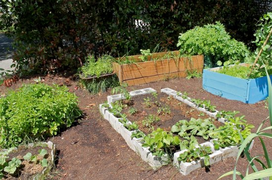 raised garden bed pictures
