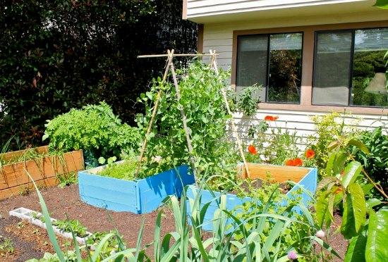 rasied garden boxes