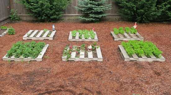 recycled wood pallet garden