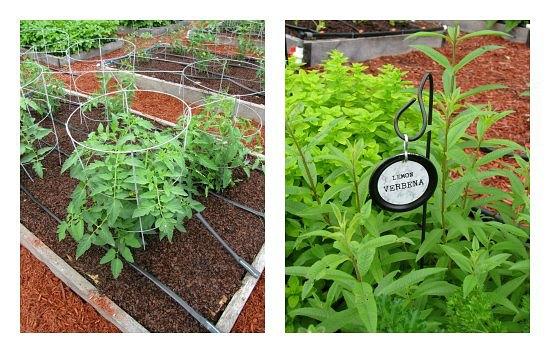 garden beds vegetables
