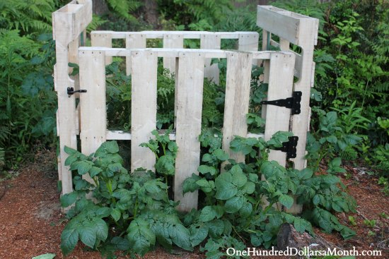 grow potatoes in compost bin
