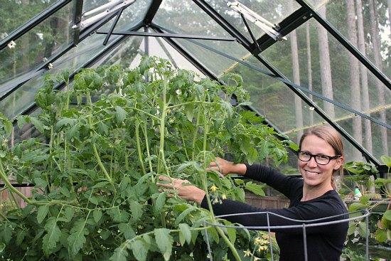 mavis butterfield tomatoes