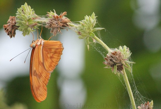 orange butterfly on flower