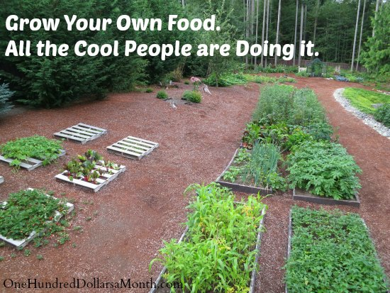 organic garden pictures