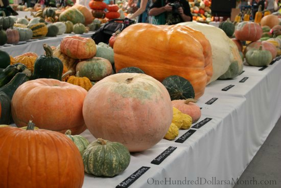 national heirloom exposition squash