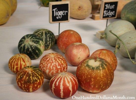 tigger melon picture