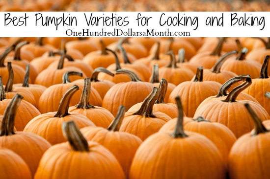 Best Pumpkin Varieties for Cooking and Baking