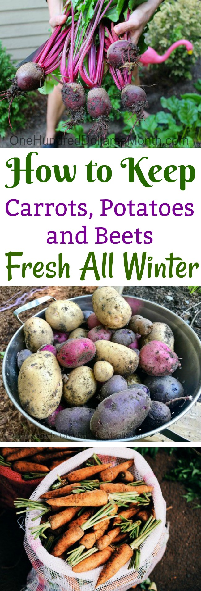how to keep carrots potatoes and beets fresh all winter one