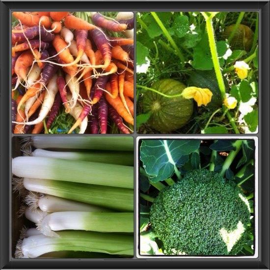 organic garden photos