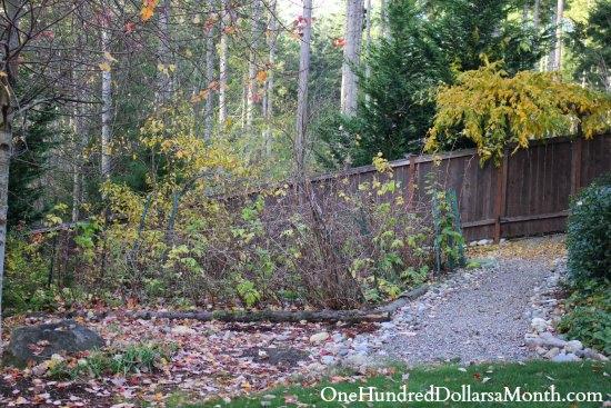 wisteria in fall