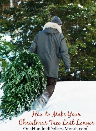How to Make Your Christmas Tree Last Longer - One Hundred Dollars ...