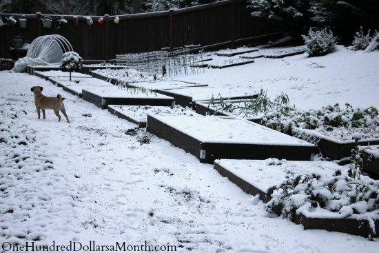 raised garden boxes winter snow