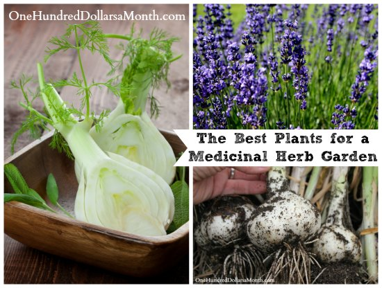 The Best Plants for a Medicinal Herb Garden