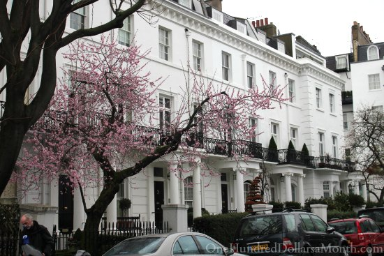 cherry tree in bloom london