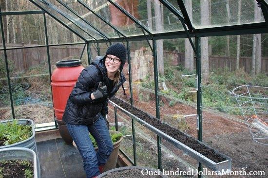 mavis butterfield greenhouse garden blog