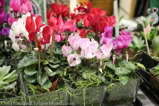 northwest flower and garden show flowers