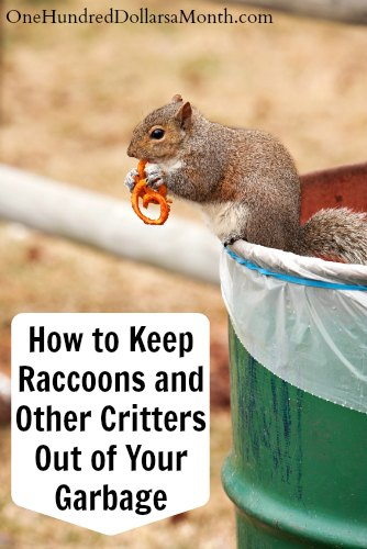 How to Keep Raccoons and Other Critters Out of Your Garbage