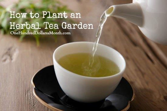 How to Plant an Herbal Tea Garden