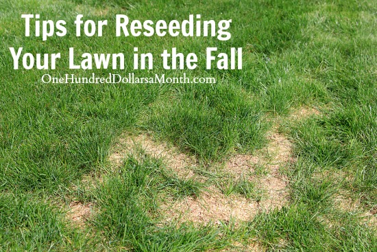 Tips for Reseeding Your Lawn in the Fall