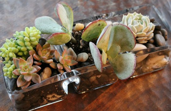 how-to-create-a-table-top-succulent-garden1