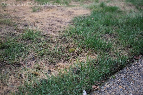 patchy lawn winter