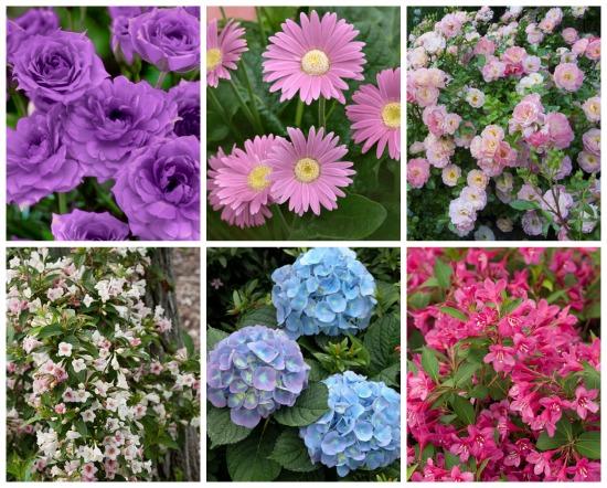 order gerber daisies online