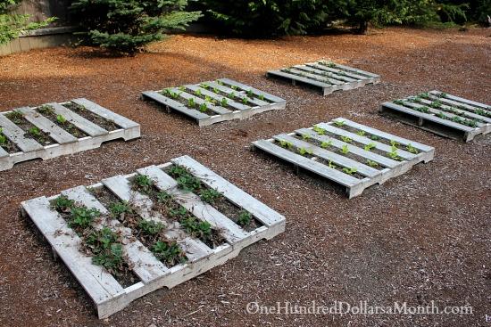 pallet gardens