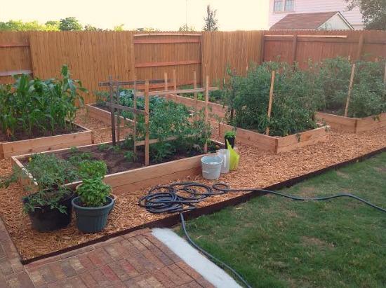 Backyard Vegetable Garden Box