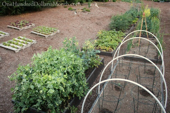 backyard garden plot pictures