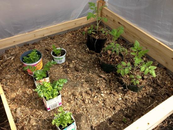 make shift greenhouse