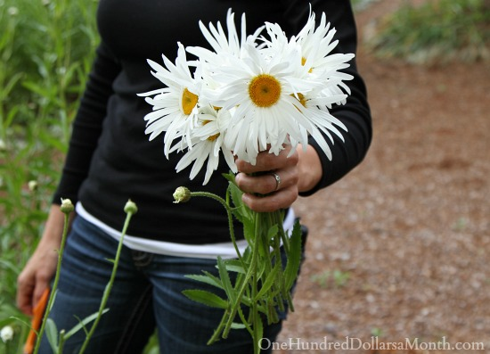 shasta daisy flower bouquet