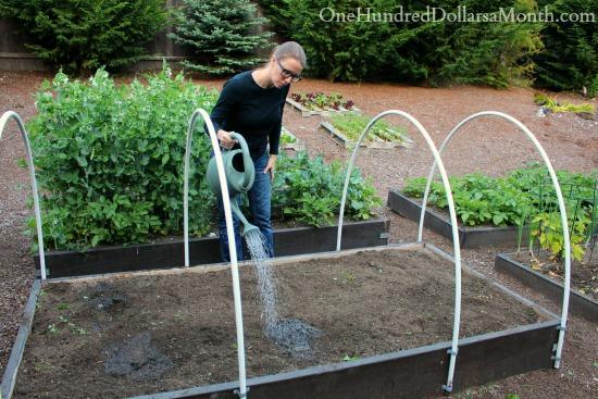 watering raised garden beds
