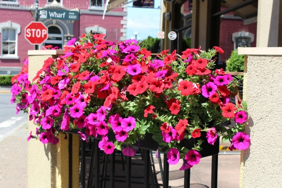 black window box filled with petunias