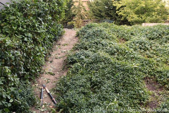 clipping hedges