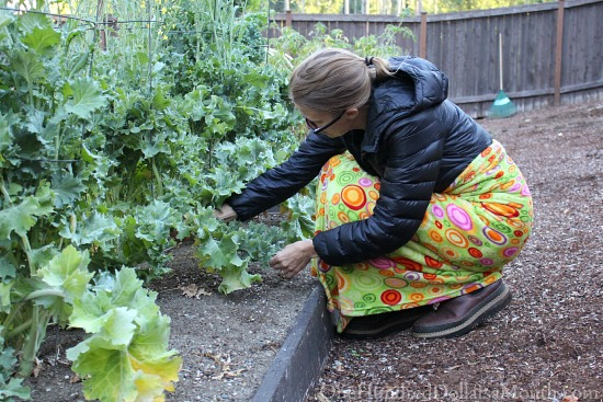 mavis butterfield picking kale
