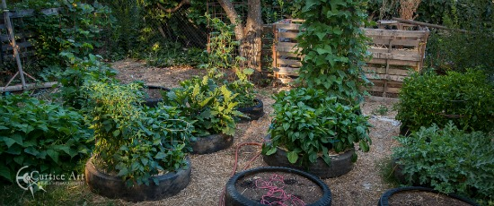 growing vegetables in tires