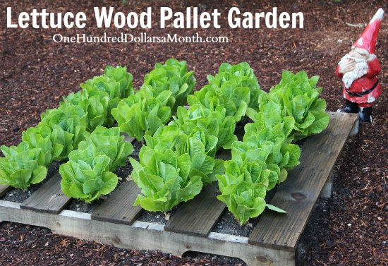 Pallet Gardening 101: Creating a Pallet Garden - One Hundred Dollars ...