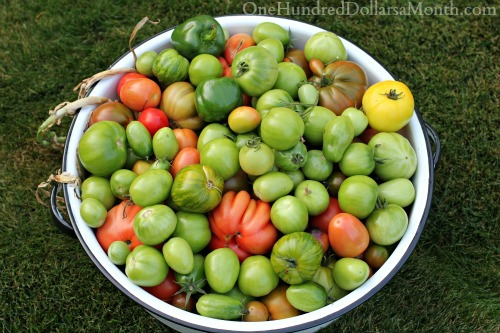 what-should-I-do-with-green-tomatoes