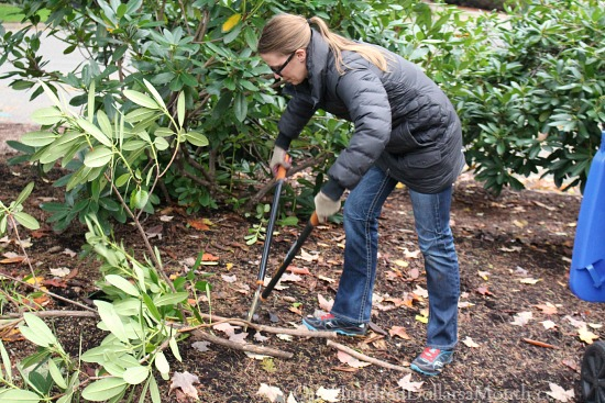 chopping rhododendrons