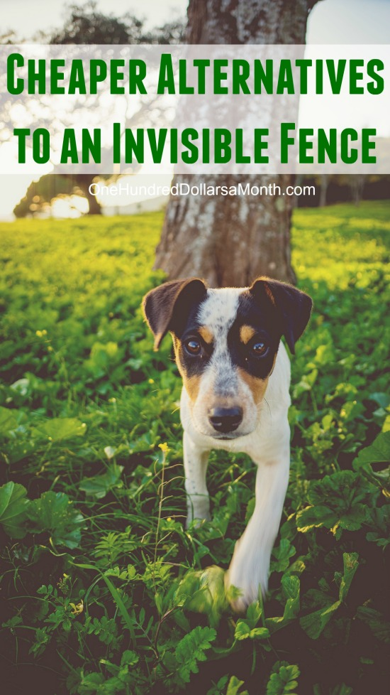 invisible fence for small dogs. What Are The Cheaper Alternatives To Invisible Fence? - One Hundred Dollars A Month Fence For Small Dogs