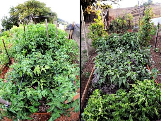 Lisa garden 5