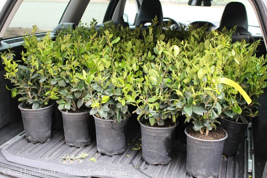 car full of plants