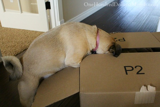 lucy opening packages